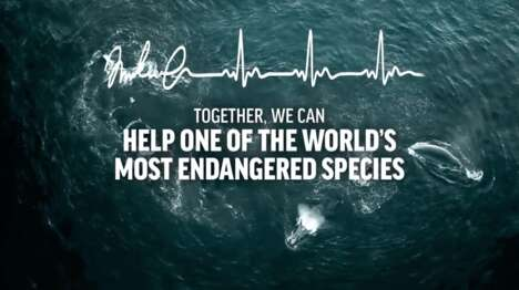 Dedicated Ocean-Protecting Organizations