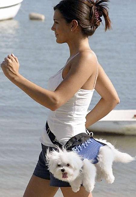 Wearing Dogs