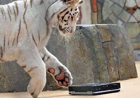 Tiger Maul Laptop Testing