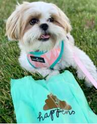 Sustainable Dog Accessories