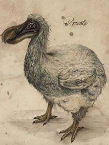 $6000 Dodo Sketches
