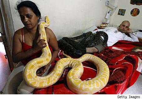 Apartment Serpents