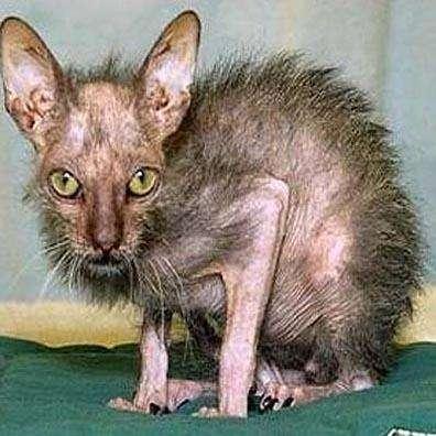 Ugly Bat Cats