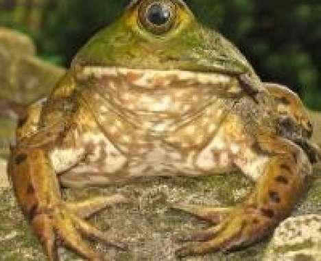 24 Frog-O-Vations