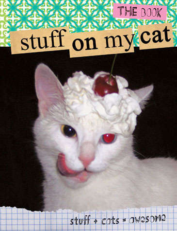Funny Feline Fixations