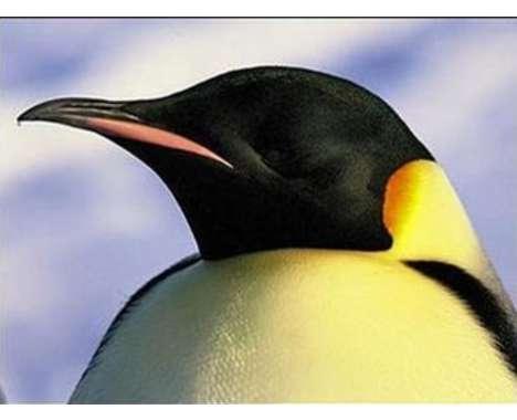 12 Penguin-novations