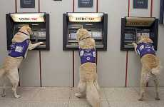Service Dogs Trained to Fetch Cash