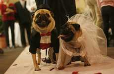 Dog Weddings - Two Pugs Tie the Knot In a Pet Store, Complete With Marriage Certificate