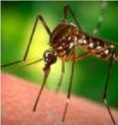 10 Mosquito Inspired Innovations