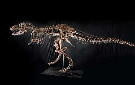 Prehistoric Auctions - Rare Tyrannosaurus Rex Skeleton Goes Under Hammer