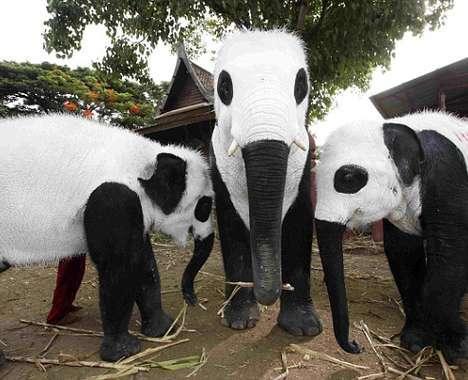 25 Zoo Innovations