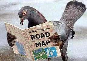 Broadband-Racing Birds