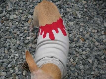 Bloody Animal Fashion