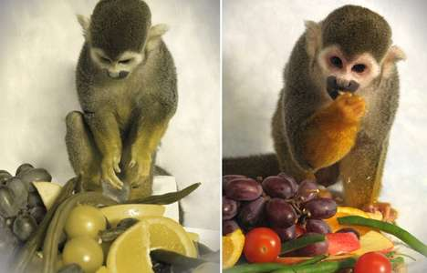 Curing Color Blindness - Will Hue-Detecting Monkeys Be the New Generation of Purse Pooches?