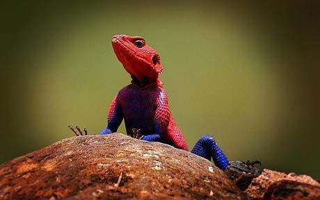 Superhero Reptiles