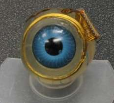 Eyeball Computer Chips