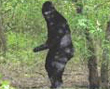 13 Funny Bigfoot Features