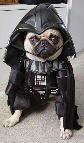 Hilarious Dog Costumes (UPDATE) - Dress Up Your Doggy as Shrek or Darth Vader