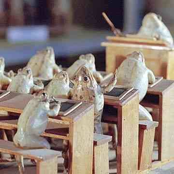 Amphibian Taxidermy  - Switzerland's Museum of Stuffed Frogs Creates Tableaus