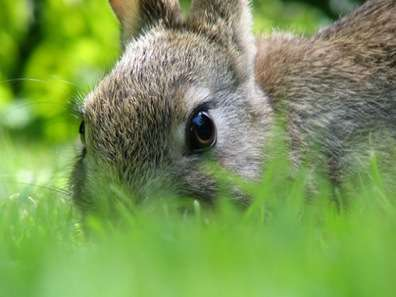 Bunny-Based Biofuel - Stockholm Burns Rabbits to Keep Swedes Warm