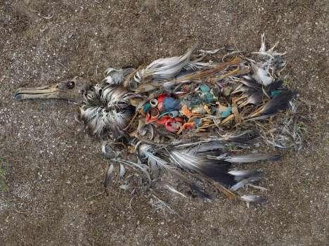 Decomposing Birdography