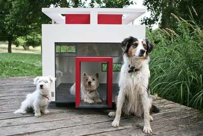 Contemporary Canine Homes