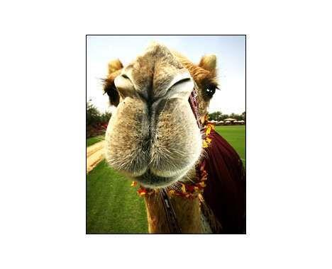 14 Camel Innovations