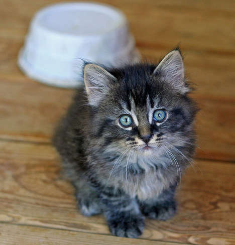 Cute Cursing Kittens