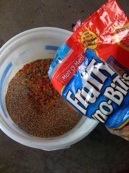 Cereal Beer