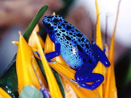 Gatorade for Frogs