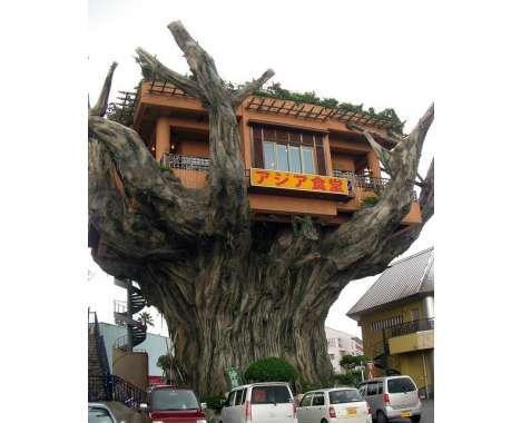 25 Arboreal Buildings