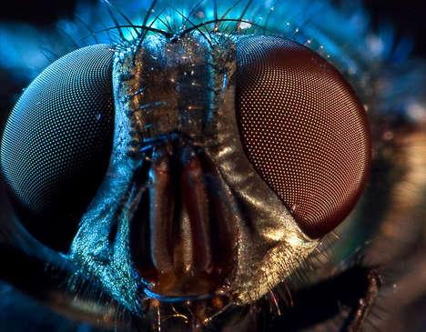 Bug-Eyed Photography