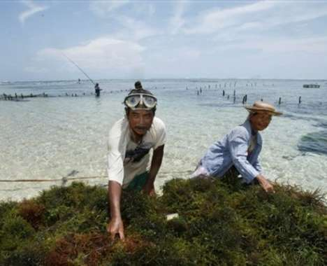 10 Sea Scum Selections