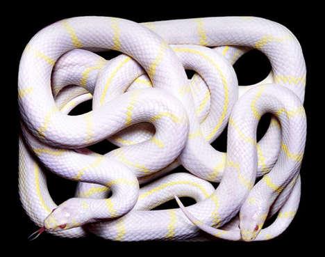 Serpentine Still Life