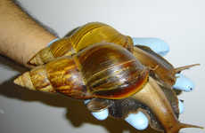Life Saving Snail Pies - New Research Suggests Snails Will Help the Malnourished in Africa