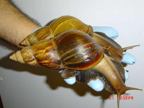Life Saving Snail Pies