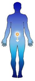 Prostaderm Belly Button Patch