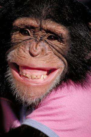 Chimp To Be Declared Human