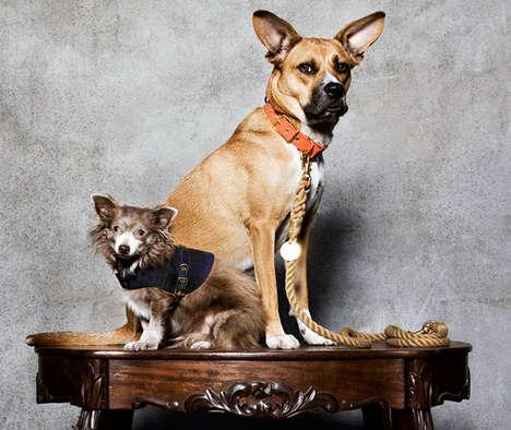 Pet-Loving Fundraisers