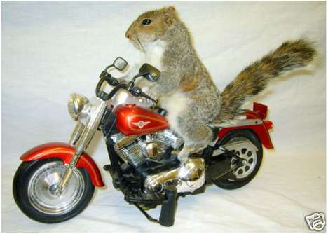Personified Squirrels - Taxidermy Humor For the Person Who Has Everything