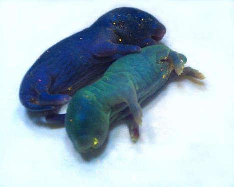 Monogamous Glowing Rodents
