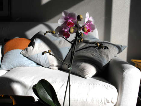 Tranquil Seaside Home Design