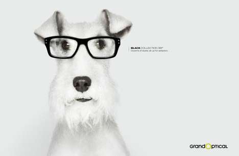 Four-Eyed Canine Campaigns