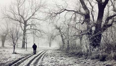 Winter Wonderland Shoots