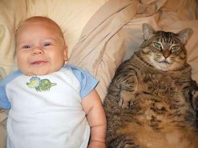 Fat Cat Blogs