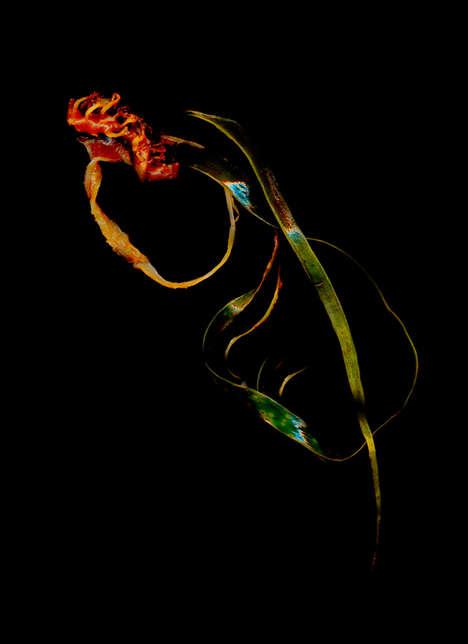 Scanned Seaweed Art