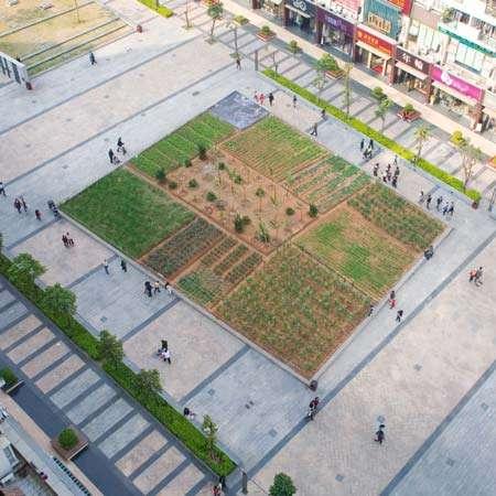 Urban Awareness Gardens