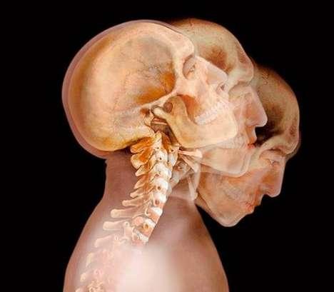 Anatomical X-Ray Art