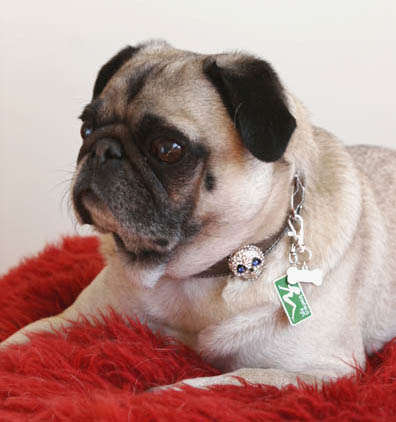 Canine Charm Collars - Fiercely Fashionable Luxury Dog Accessories from BowhausNYC