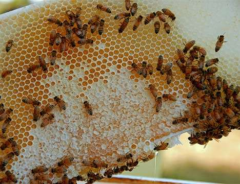 Eco-Restorations with Honey